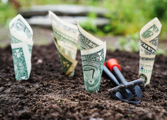 dollars growing from the ground