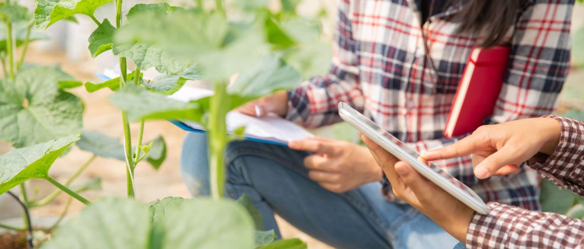 The agronomist examines the growing melon seedlings with the help of AI