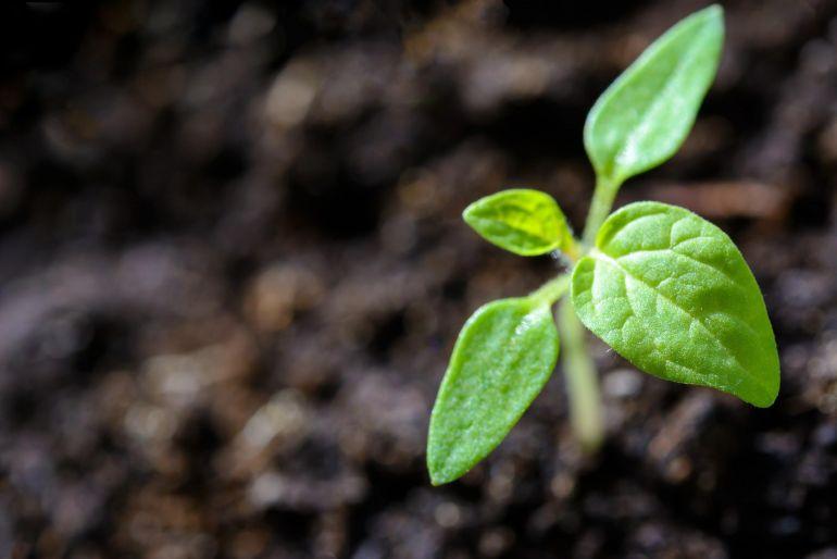 Regenerative Agriculture | WalterSchindler.com