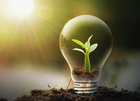 Young plant grows inside a lightbulb, representing green initiatives and energy conservation