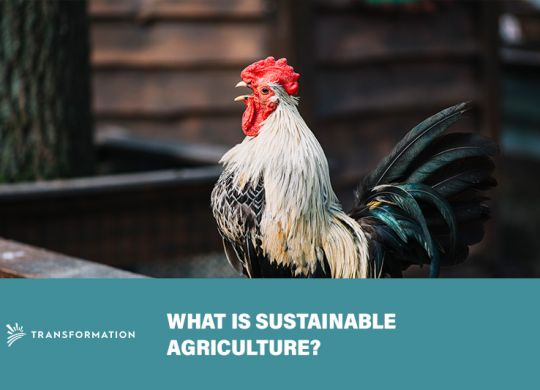What Is Sustainable Agriculture?   Impact Investing   WalterSchindler.com