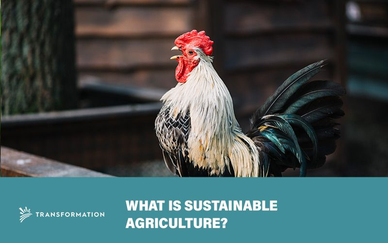 What Is Sustainable Agriculture? | Impact Investing | WalterSchindler.com