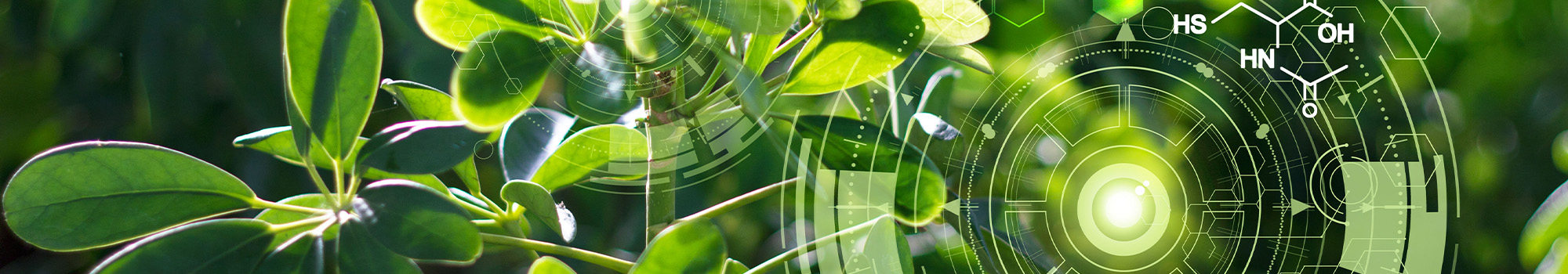 Green Technology Investments | WalterSchindler.com