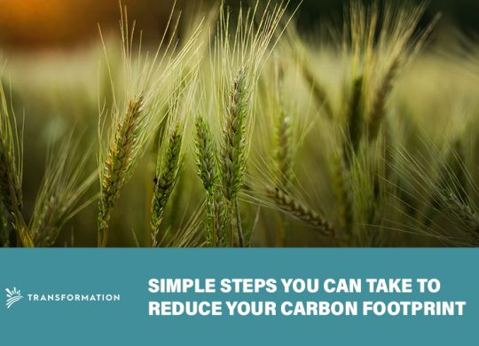 Reduce Your Carbon Footprint | TransformationHoldings LLC