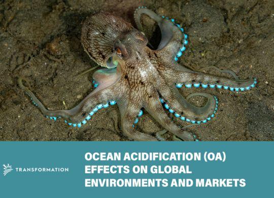 ocean acidification, coconut octopus | WalterSchindler.com